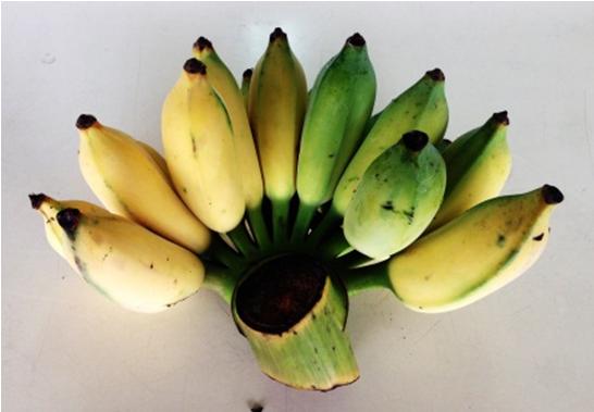 1_banana-1