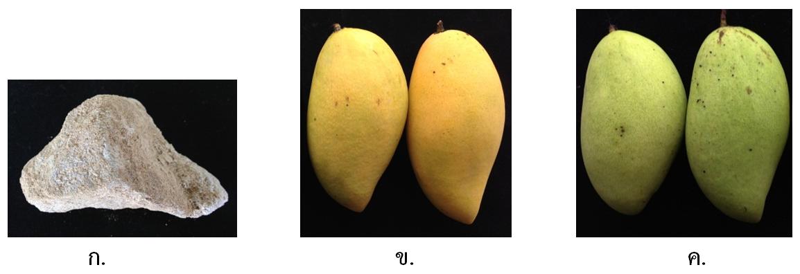 3_mango-3