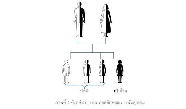 ภาพ 4 genetics miscnoception