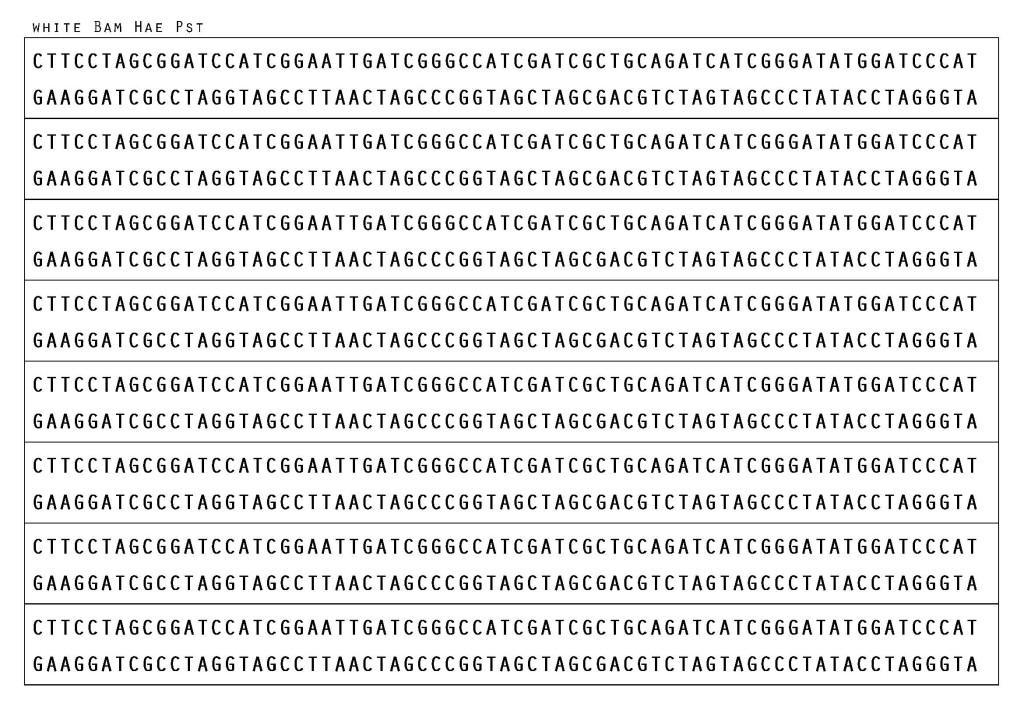 1. DNA ตัดด้วย REs enz 3 ชนิด