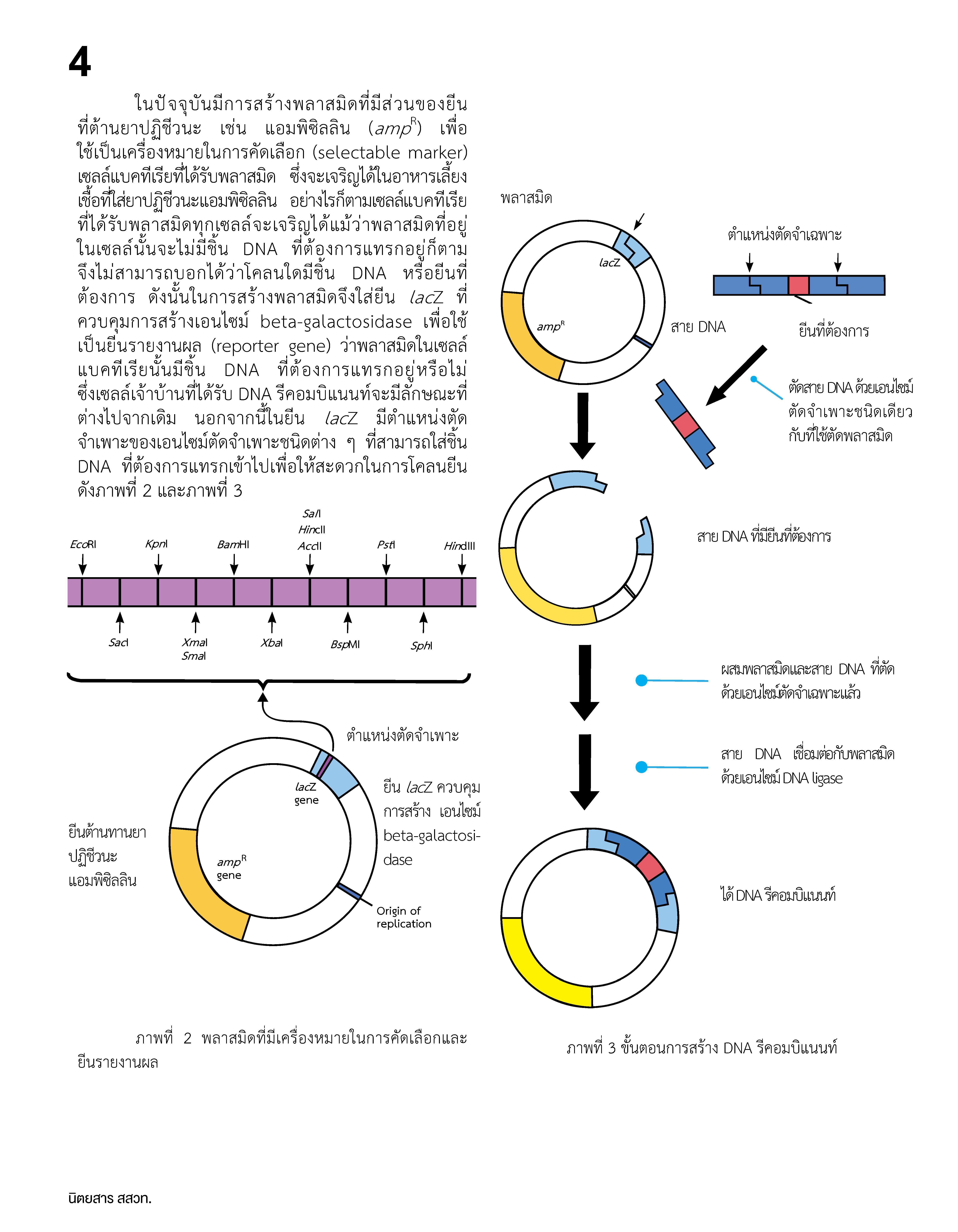 การโคลน DNA_Page_3
